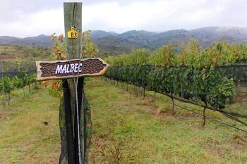 Dreamstime - Argentinian Vineyards