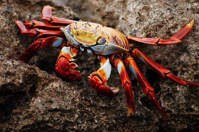 Pixabay Galápagos