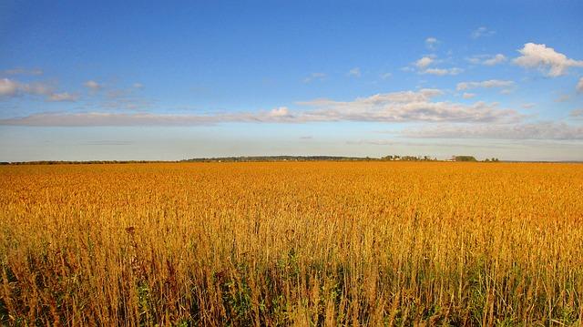 Pixabay - Wheat